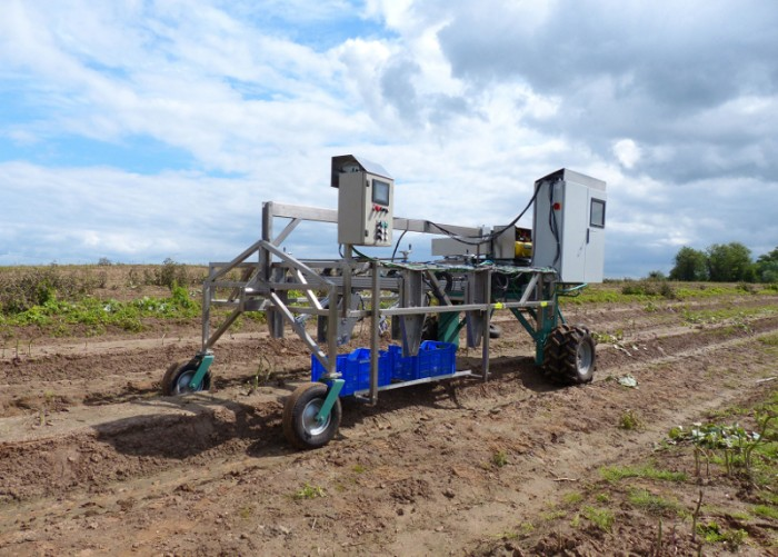 """""""Green asparagus harvesting robotic system"""" (Garotics) is able to work for 24 hours in the fields.Photo by HepcoMotion"""