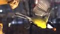 High speed imaging - Birds flying